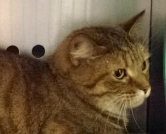 Hamilton Cat Rescue Groups